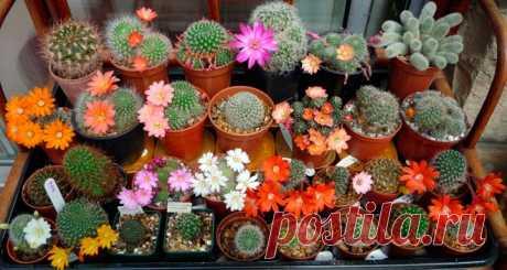 Все виды кактусов с фото и названиями