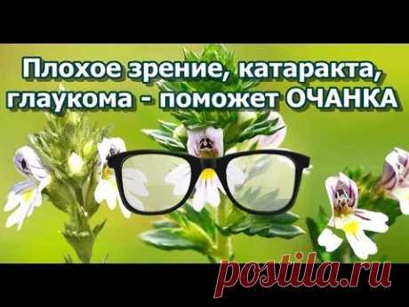 Плохое зрение, катаракта, глаукома - поможет ОЧАНКА - YouTube