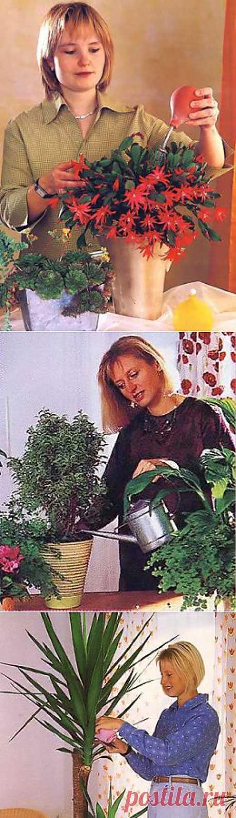 Уход за домашними цветами зимой. Вредители комнатных растений | Любимые цветы