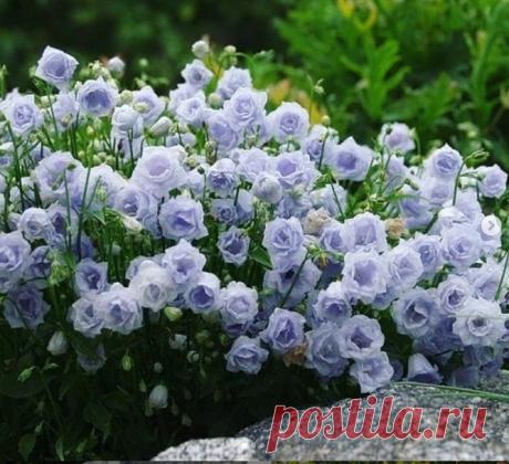 7 необычных цветов в нашем саду | Лана Самсонова | Яндекс Дзен