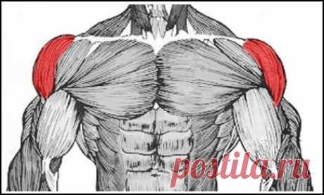 Три факта о плечах — Мегаздоров