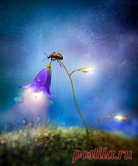 Смотри, любуйся... Мне не жалко... — вздрогнул колокольчик... — Возможно, на один мой взгляд душа станет богаче...И я почувствовала, как это чудесно — ощутить посреди смещённого сознания... Ощутить то, что сегодня на один цветок душа твоя стала богаче... Богаче на один цветок... Много это или мало?— Это бесконечно... — вызрел вызвоном слов колокольчик... И божья коровка ещё крепче прижалась к его качающемуся на ветру стеблю...
