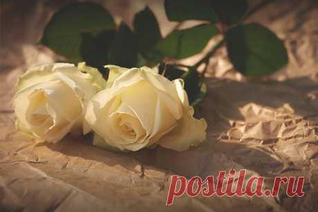 К чему снятся белые розы   Сонник-снов