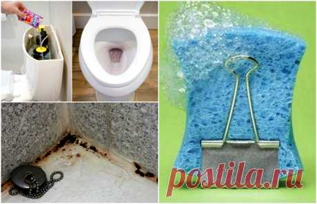 15 simple councils which will help to make a bathroom pure and fresh