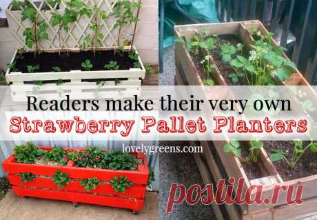 Strawberry Pallet Planters Readers use Lovely Greens DIY instructions to make their own Strawberry Pallet Planters