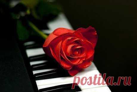 Жизнь-как фортепиано...!