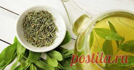Зеленый чай и его польза для здоровья.