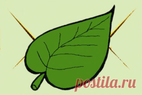 Колоновидные | Купить/заказать саженцы с доставкой по почте