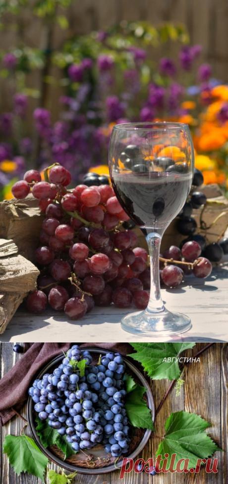 Сорта винограда для красного вина – топ 15