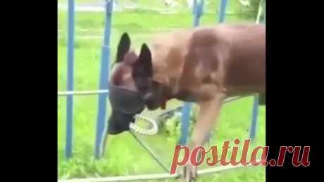 Пёс-спасатель