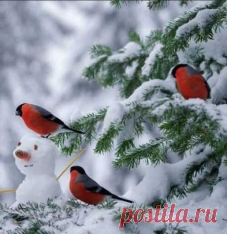 Снегири...   красавчики!!!
