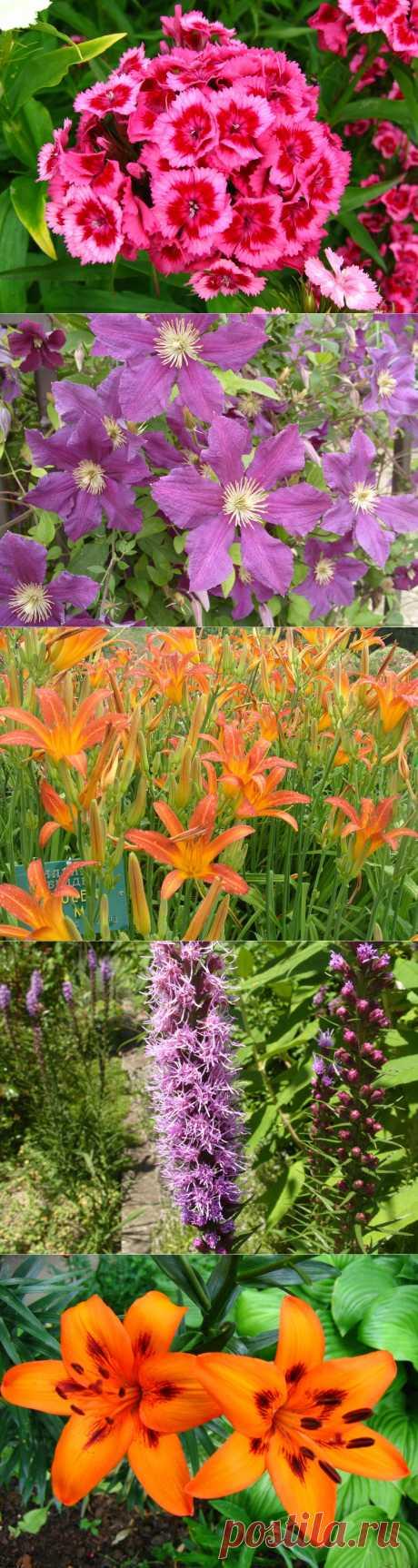 10 растений, цветущих в июне.  Идёт прекрасный месяц июнь, ничуть не уступающий предыдущему маю по красоте цветущих в нем растений. Среди них прима-цветников — роза, король лиан — клематис, помпезный, напыщенный красавец пион, импозантный люпин, умопомрачительный эремурус и многие другие растения, перечисление которых заняло бы целую страницу, но мы решили отобрать всего 10 цветочных лидеров, которые все чаще и чаще встречаются у нас на дачах и именно их сорта мы каждый год ищем в продаже.
