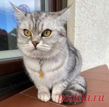 Кошка не дает покоя? Рассказываем, как научить кошку играть самостоятельно | Догги Академия | Яндекс Дзен