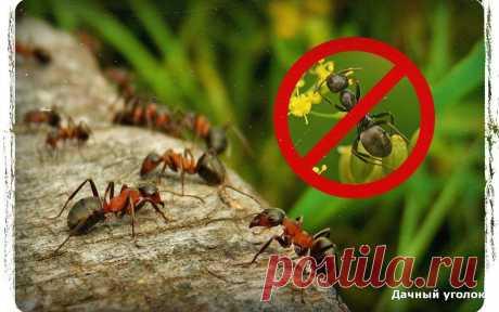 Как я избавился от муравьёв на даче с помощью йода - дёшево и быстро | Дачный уголок | Яндекс Дзен