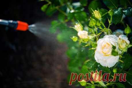 Стимуляторы цветения и плодоношения: обзор препаратов для пышного цветения и высокого урожая | Удобрения и стимуляторы (Огород.ru)