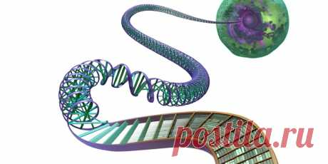Ваши клетки и ДНК— живые библиотеки!