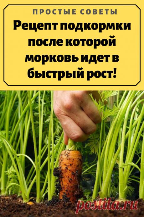 Рецепт подкормки после которой морковь идет в быстрый рост!Морковь — неприхотливый корнеплод, но часто бывает так что урожай получается кривым и скудным, но я нашла решение этой проблемы. И уже на протяжение многих лет морковка у меня крупная, ровная и сладкая.