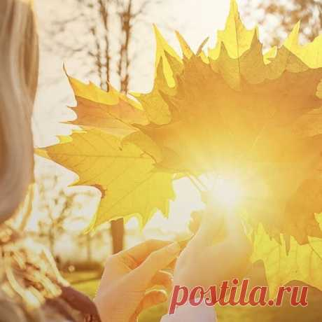 И вот уже сентябрь играет с солнцем, С веселым ветром и разноцветьем листьев.  И от красот душа парит, смеётся, Не спрятаться от волшебства и мыслей.  Смотреть на солнце сквозь желтеющие ветви, На пламень радуги сияющих лучей.  И провожать восторг, воспоминанья эти, Пока не отгорит закатный свет свечей.  Света Ланских
