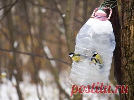 По всему огороду натыканы пластиковые бутылки! Зачем это нужно?