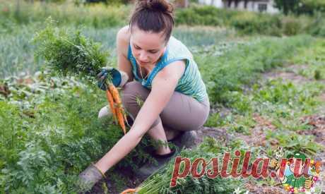 Ботву каких растений полезно закапывать в грядки, а каких вредно?   Весёлый Дачник    Яндекс Дзен