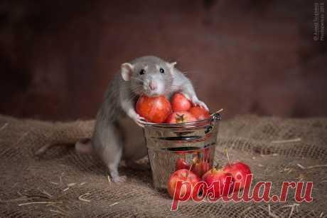 сообщение Litizija : Интересная подборка животных (00:12 30-04-2014) [4360286/322954308] - osipchuk.1951@mail.ru - Почта Mail.Ru
