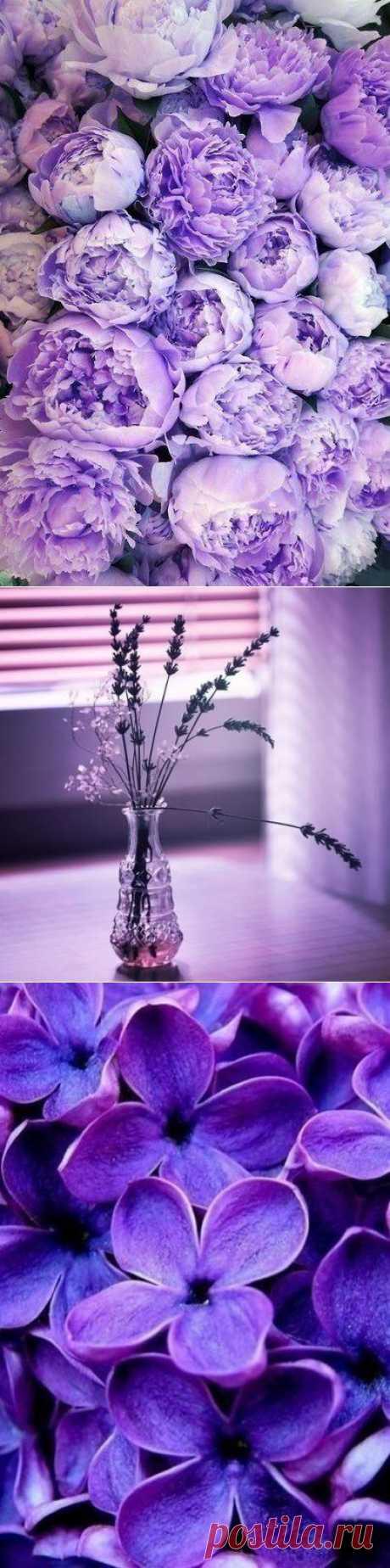 Больше фиолетового!!!:)