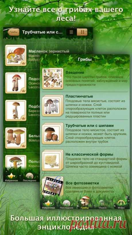 [Sale-iOS] Mushrooms: The big Encyclopedia you Love mushroom soup? And fried chanterelles with potato? Salty milk mushrooms in sour cream and with garlic, crackling and fragrant? You love?! Then take friends, a basket and in the wood!... but do not forget the iPhone or iPad with the Our Mushrooms appendix - the unique mushroom encyclopedia! 229 rub -> 75 rub. Reference: ====================== #app_store #распродажа@app_4u