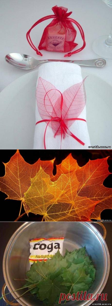 Осеннее хобби - Скелетирование листьев
