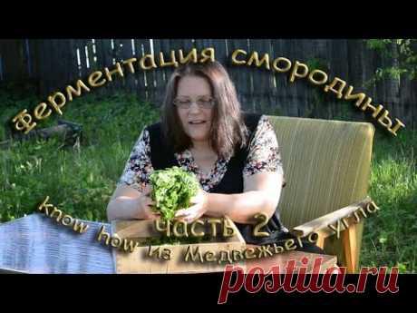 ФЕРМЕНТАЦИЯ СМОРОДИНОВОГО ЛИСТА