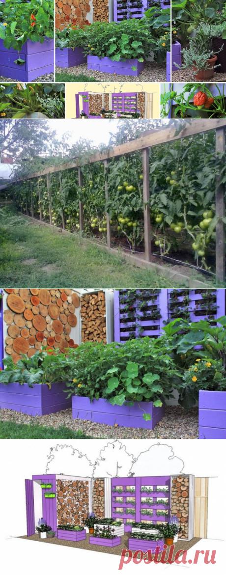 Компактно, красиво, урожайно – декоративный огород своими руками   Личный опыт (Огород.ru)