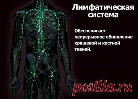 Чистая лимфа – здоровые суставы - Правда ли что заболевания суставов в большинстве своём вызваны сбоями в лимфатической системе организма? - Да всё верно. Лимфатическая система - система питания суставов. Стоит лимфатической системе дать сбой, как начинают сыпаться суставы.