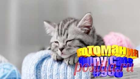 Вам нравится смотреть смешные видео про котов? Тогда мы уверены, Вам понравится наше видео 😍. Также на котомании Вас ждут: видео кот,видео кота,видео коте,видео котов,видео кошек,видео кошка,видео кошки,видео о котах, видео о смешных кошках, видео смешные котиков, говорящие коты видео, коты видео приколы, кошек смешные, о кошках, приколы от кошек, про котов, про кошку, смешное, смешные видео про кошки, смешные котята
