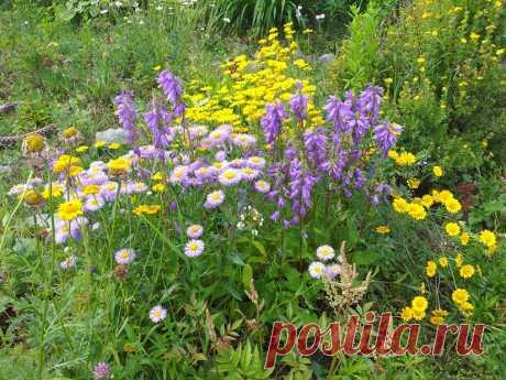 Садовое многоцветие