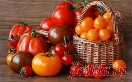 дрожжи-Секретная подкормка для томатов