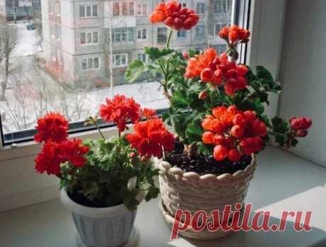 5 домашних растений, защищающих от порчи и сглаза Некоторые цветы имеют свойство на энергетическом уровне защищать тех, кто ухаживает за ними дает им жизнь. Возможно какие-то цветы уже имеются в вашем ботаническом арсенале.