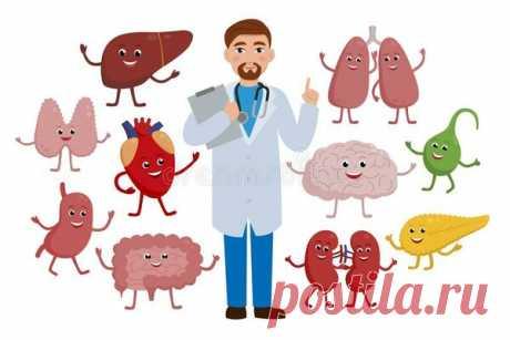 Капустный эликсир и ряд продуктов помогут сохранить здоровье селезенки   Будем здоровы   Яндекс Дзен