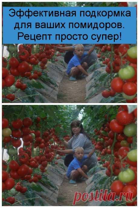 Эффективная подкормка для ваших помидоров. Рецепт просто супер!