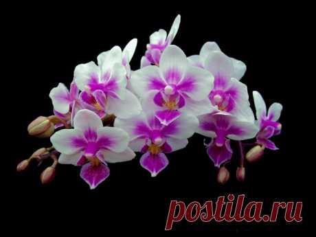 Обои на рабочий стол Цветы:Орхидея, Цветок, Флора - скачать бесплатно.   Обои-на-стол.com