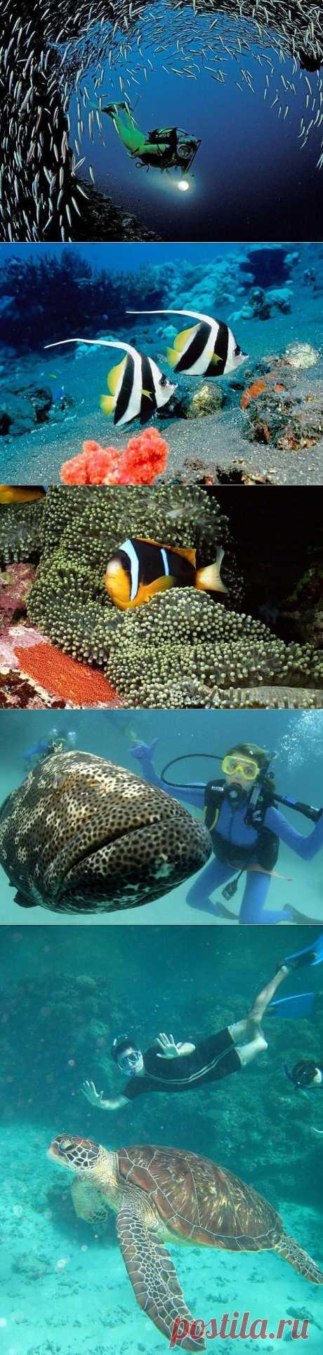 Большой барьерный риф Австралии (43 фотографии) | Webpark.ru