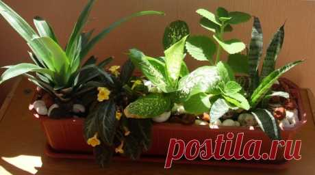 Особенности зимовки кадочных растений — Чудеса