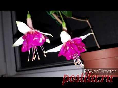 Этот безумно красивый цветок. | Все о цветах | Яндекс Дзен