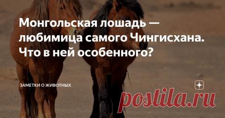 Монгольская лошадь — любимица самого Чингисхана. Что в ней особенного? Монгольская лошадь — очень необычная лошадь. Во всех отношениях.