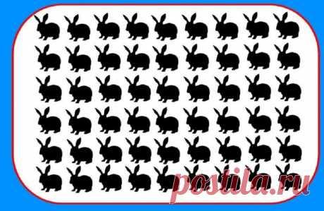 Тест на внимательность: Найдите за 20 секунд кролика, который нуждается в помощи ветеринара. | Скиталец | Яндекс Дзен