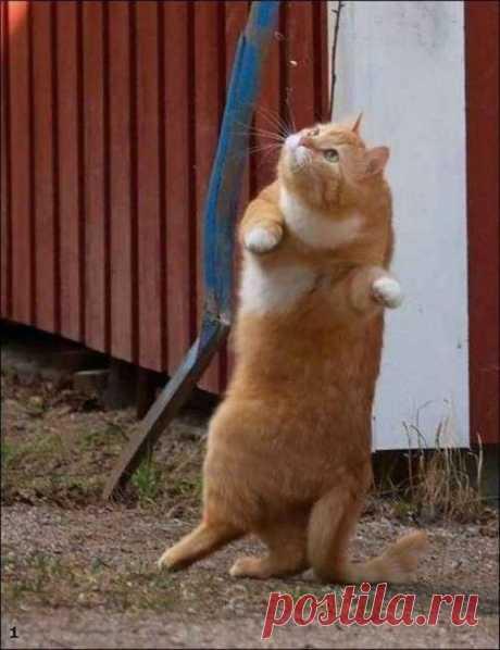 Коты и кошки / Питомцы