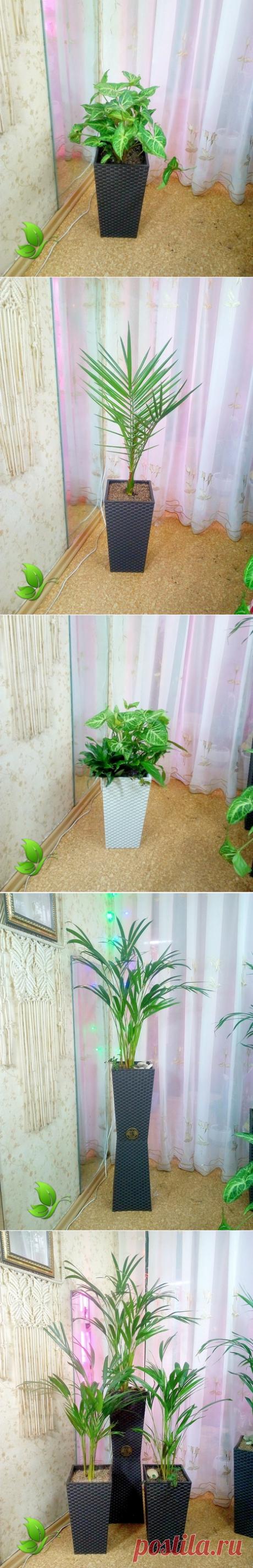 Высокие Напольные Растения. Челябинск