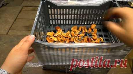 Простая сушилка для яблок из пластиковых ящиков Приветствую всех любителей помастерить, предлагаю к рассмотрению инструкцию по изготовлению простейшей сушилки для яблок, грибов, овощей и не только. Самоделку автор собрал из пластиковых ящиков, которые порой можно достать бесплатно. Из ящиков был собран сушильный шкаф, а в самой нижней части