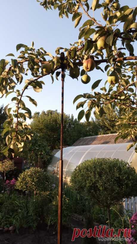 Универсальная подпорка для ветвей плодовых деревьев