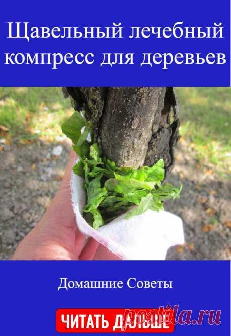 Щавельный лечебный компресс для деревьев