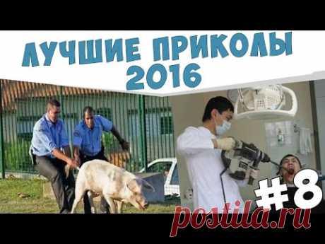 ПРИКОЛЫ №8 Смешные видео с животными и людьми 2016. funny videos with animals and humans. - YouTube