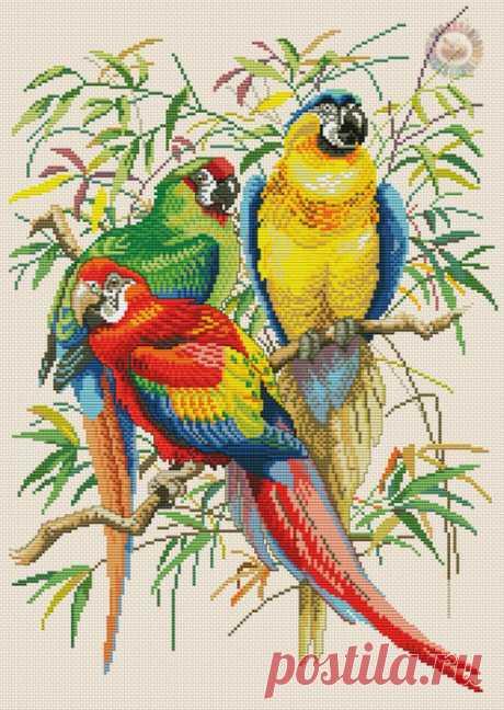 >Птицы